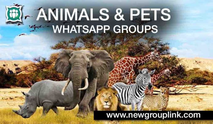 Animals and Pets WhatsApp Groups