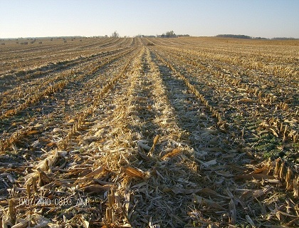 Stover Windrow with Shallow Center