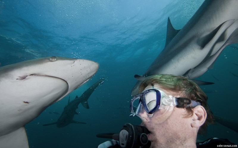 9_CATERS_shark_selfies_10-800x498