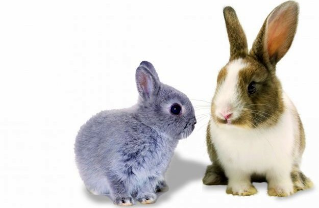 Interesting Bunny Rabbit Facts for Kids