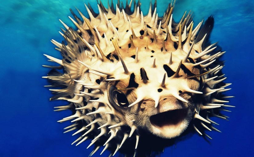 Interesting Puffer Fish Facts and Information
