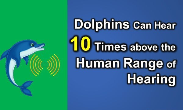 Dolphin facts