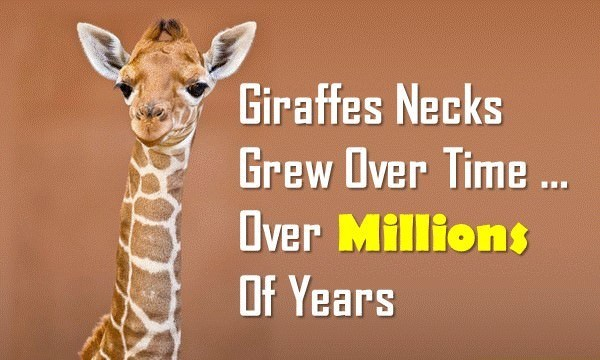 Giraffe Facts: 10 Fun Facts about Giraffes | Interesting Facts