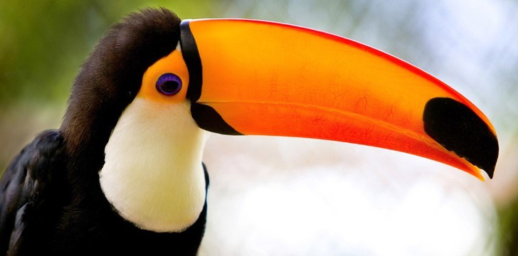 Top 30 Interesting Facts About Toucans