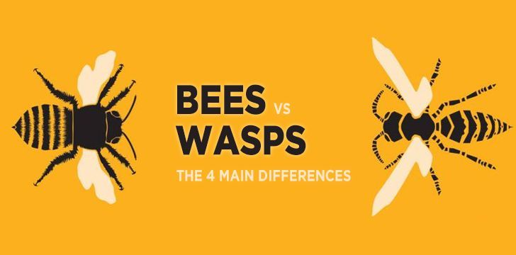 Bees Vs Wasps: The 4 Main Differences