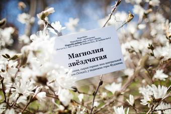 В ботаническом саду Калининграда зацвели сакура и магнолия ...