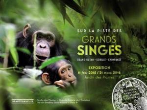 Sur la piste des grands singes exposition Museum Nationale d Histoire Naturelle