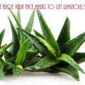Best Aloe Vera Face Packs to get Clear, Glowing Skin