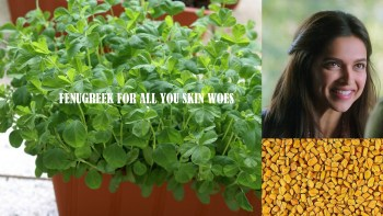 Fenugreek (Methi) for All your Skin Issues, Indian Skincare Blog