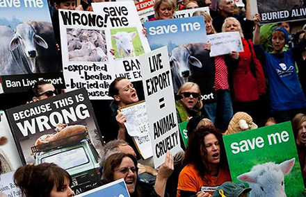 Australians protest live exports. Photo by AAP.