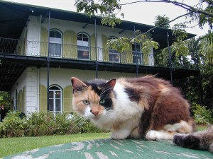 HemingwayHouse2