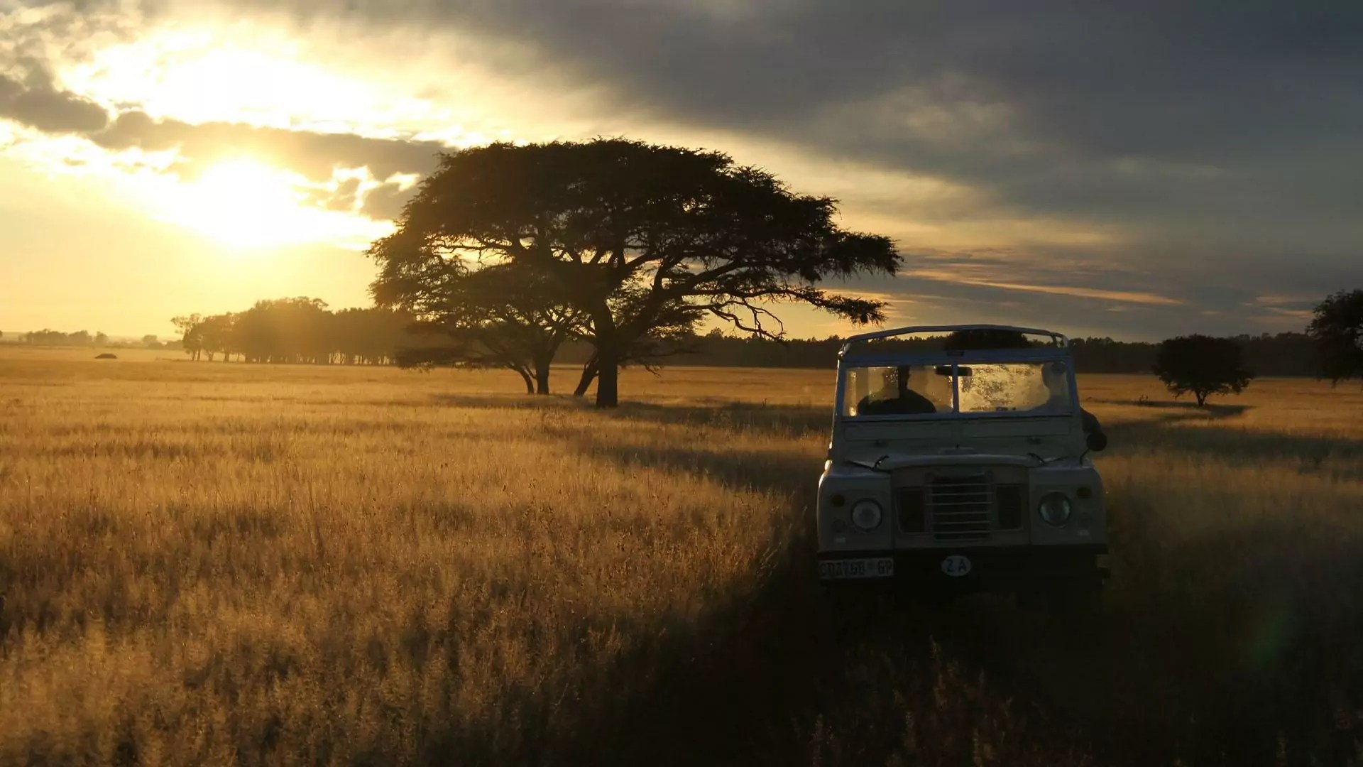 Serengeti fields and trees during sunset, as a car drives along a path.