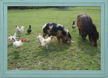 Pigs and chickens