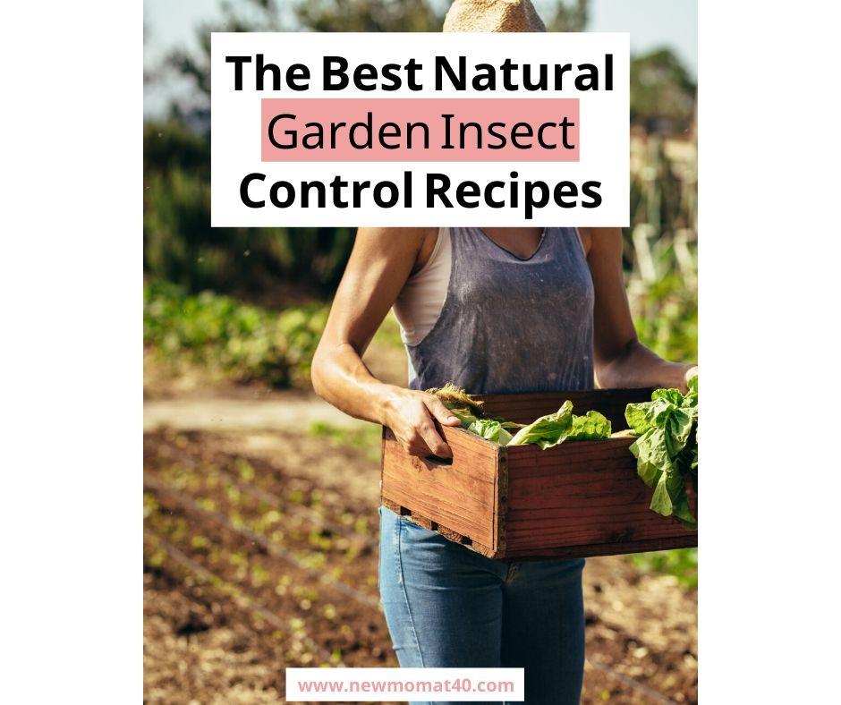 The Best Natural Garden Pest Control Recipes
