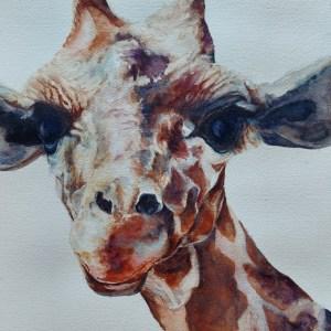 """""""Stretch Giraffe"""" Susan McLaren New Moon Network"""