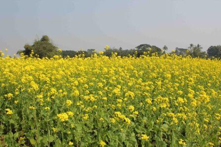 Govindpur Village 7