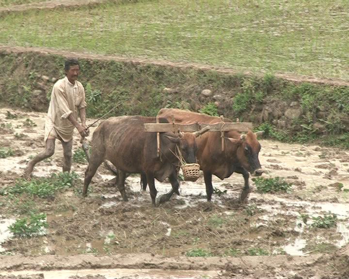 Naveen Pattnaik Launches Health Insurance Scheme for Farmers in Odisha