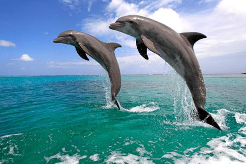 Satapada Dolphin Sanctuary