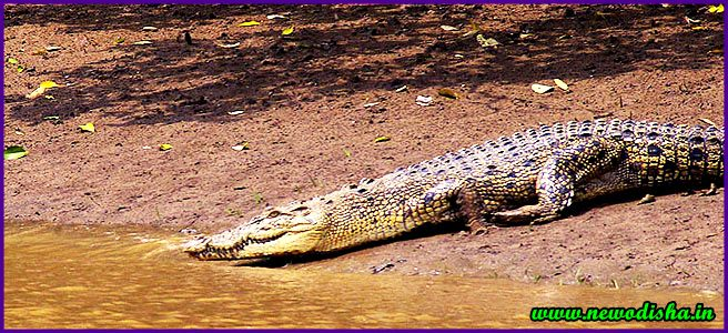 Bhitarkanika National Park Photo - NewOdisha.In