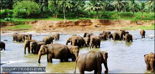 Chandaka Elephant Reserve of Odisha