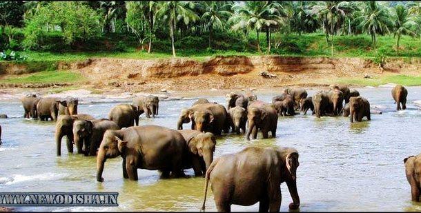 Chandaka Elephant Reserve of Odisha