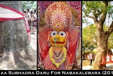Subhadra's Daru identified at Adhanga in Jagatsinghpur for 2015 Nabakalebara