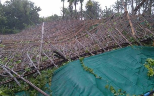 Betel Leaf Plantation Destroyed As Cyclone Amphan Hits Odisha
