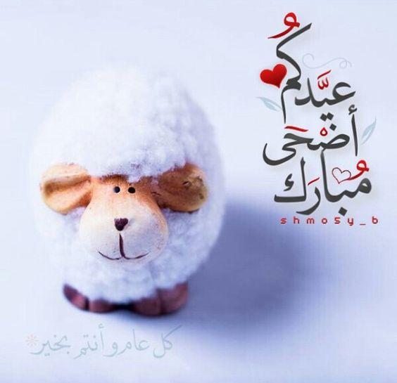 خروف عيد الأضحى مضحكة 2019 صور مضحكة لخروف العيد 2019