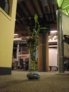 Bamboo Fun 225x300 25 Beautiful Indoor Plant Design Images