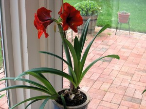 Bright Red 300x225 25 Beautiful Indoor Plant Design Images