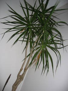 Tall and Green 225x300 25 Beautiful Indoor Plant Design Images