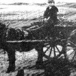 donkeycart.jpg