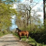 horsesmall.jpg