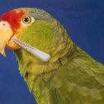 Offensive Bird