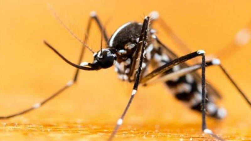Азиатский тигровый комар атаковал Стамбул