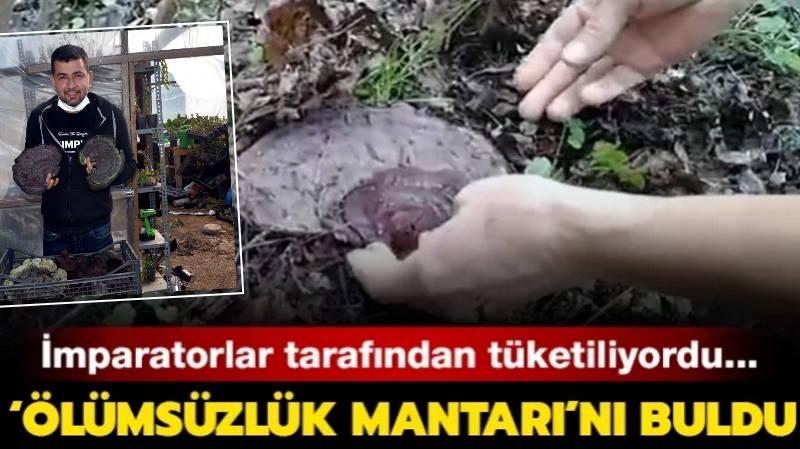 Житель Мармариса нашел «гриб бессмертия»
