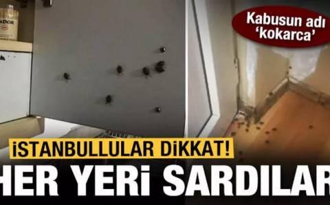 Клопы-вонючки атаковали стамбульские районы