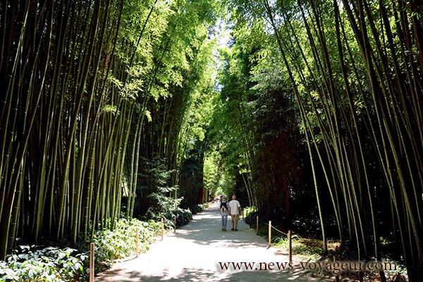 anduze-bambouseraie