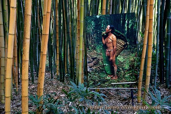 photo-java-bambou