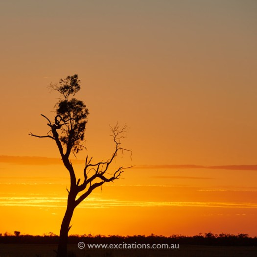large old tree silhouetted against a sunset near Pooncarie, NSW, Australia. Phot adventure photography workshops by excitations, regional Australia.