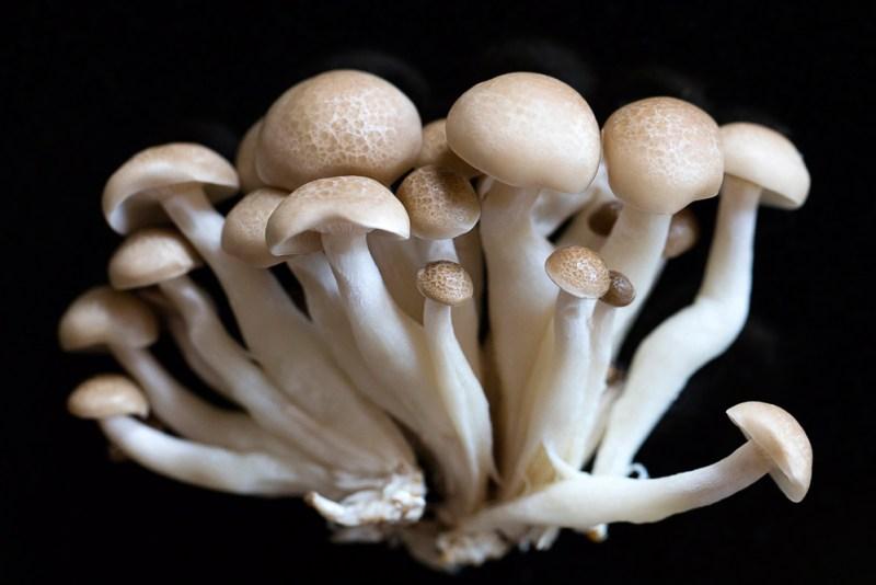 Exotic beech mushrooms