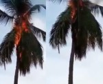 ''They must die''- Watch hilarious video of some residents in Festac town offering prayers to God after a coconut tree went up in flames moments after lightning struck it
