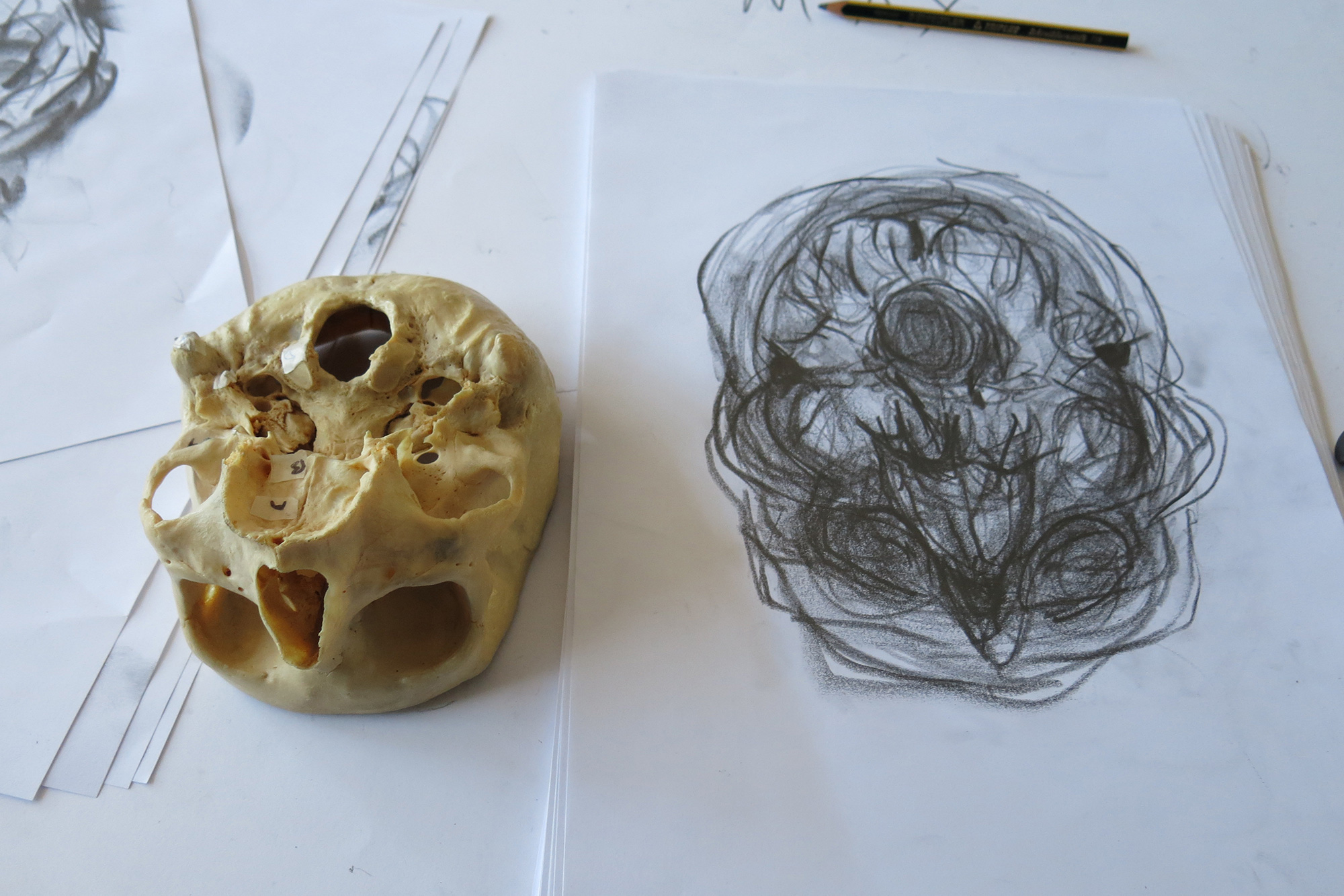 Enhancing The Learning Of Anatomy