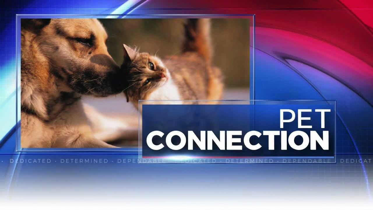 pet connection_339560