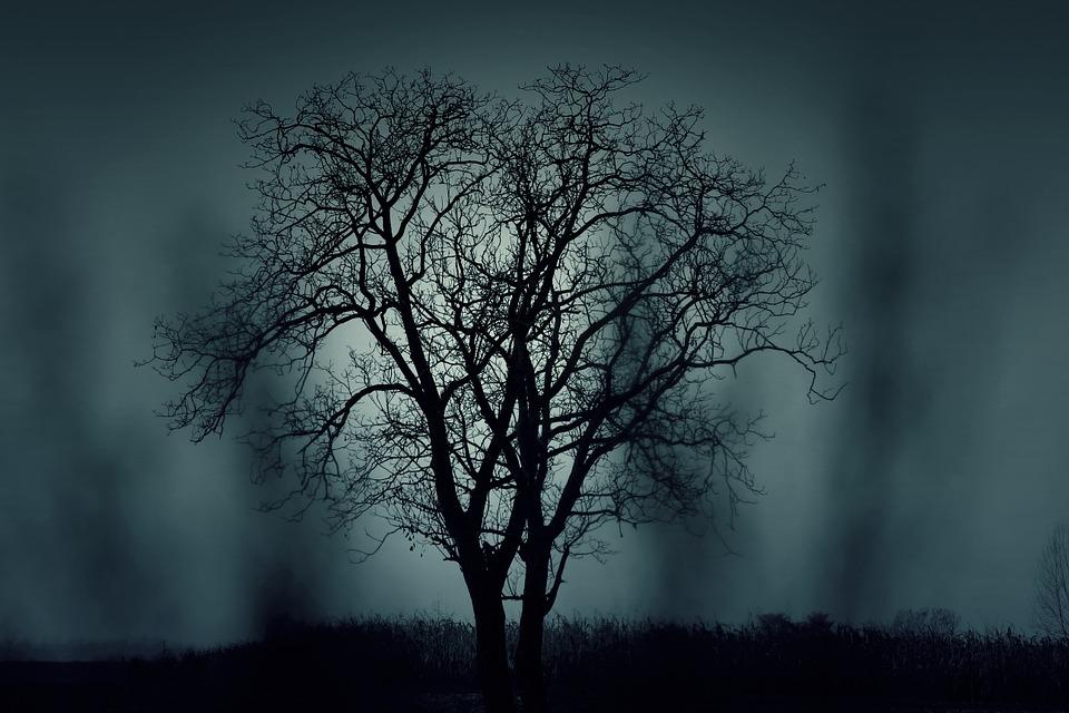 Spooky Tree_649323
