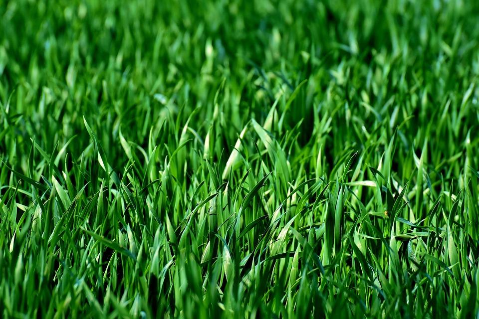 green grass_1558123357128.jpg