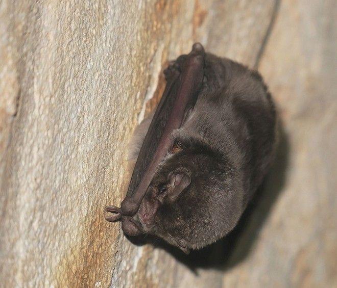 Νυχτερίδες στο σπήλαιο Λιμνών στα Καστριά Αχαΐας