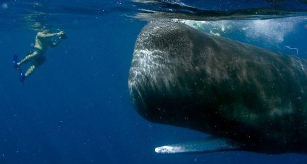 Τετ-α-τετ με μια φάλαινα φυσητήρα – Newsbeast