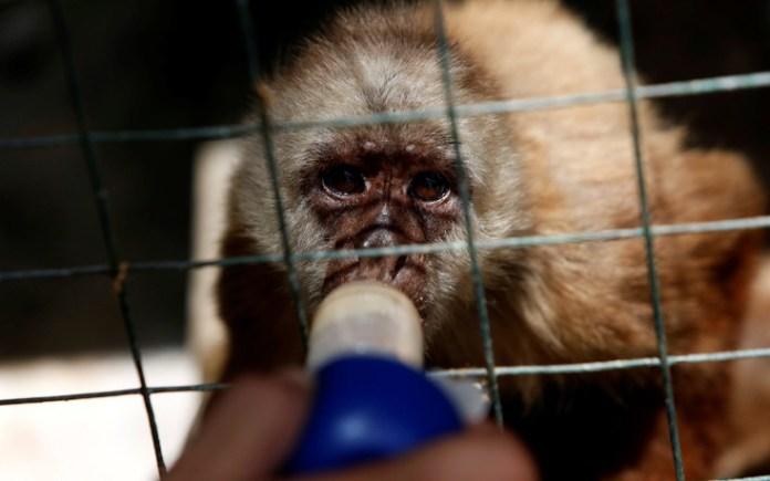 venezuela_zoo13