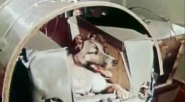 Σκύλος μόσχα διάστημα αδέσποτο σκυλί Αδέσποτα